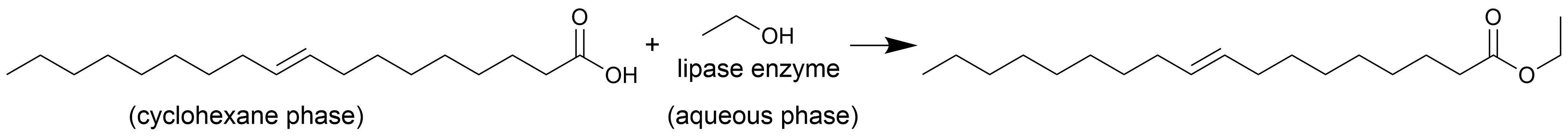 enzymatic esterification scheme